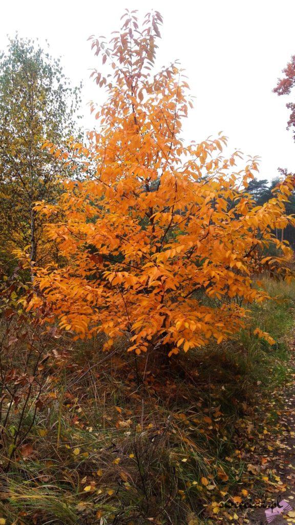 Jesienny spacer po lesie