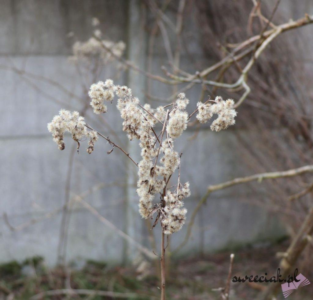 Marcowa wiosna w obiektywie