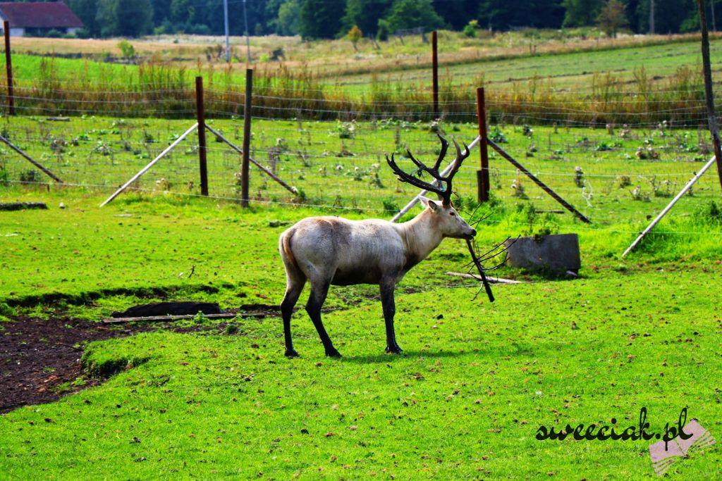Park Dzikich Zwierząt w Kadzidłowie - wspaniała, dzika przygoda