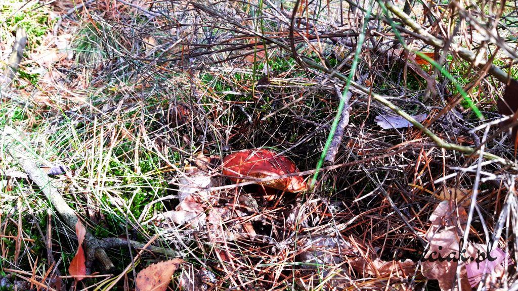 Październikowy spacer po lesie