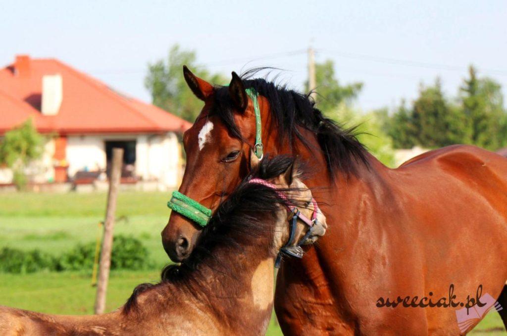 Stadnina koni - Majówka 2018 w obiektywie