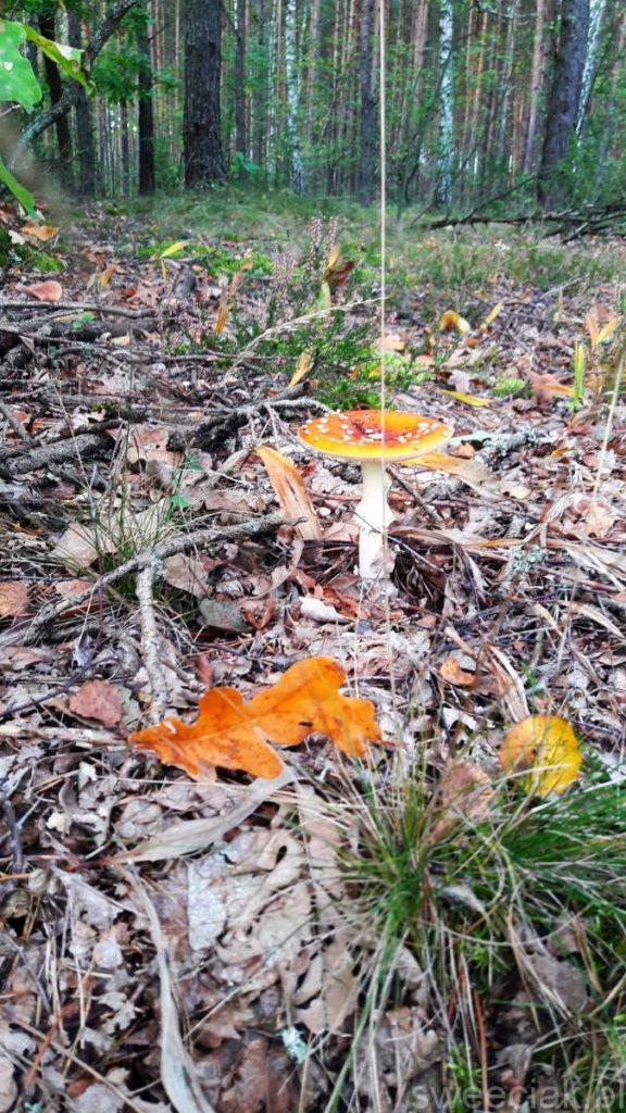 Pod liściem skrzętnie ukryte...