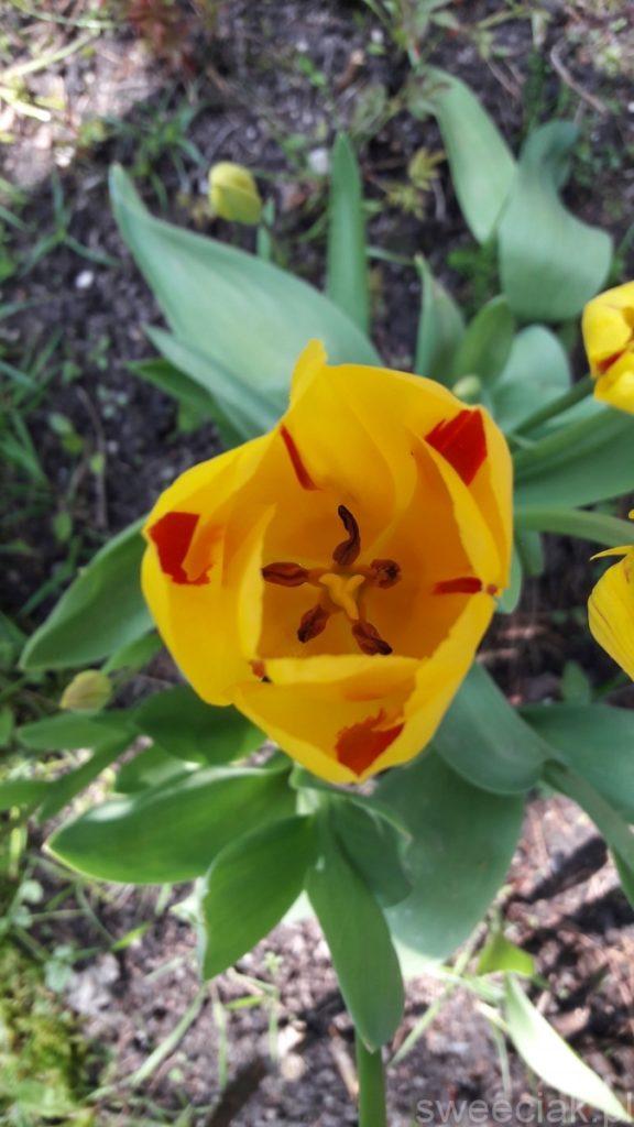 Wiosna w ogrodzie 2017