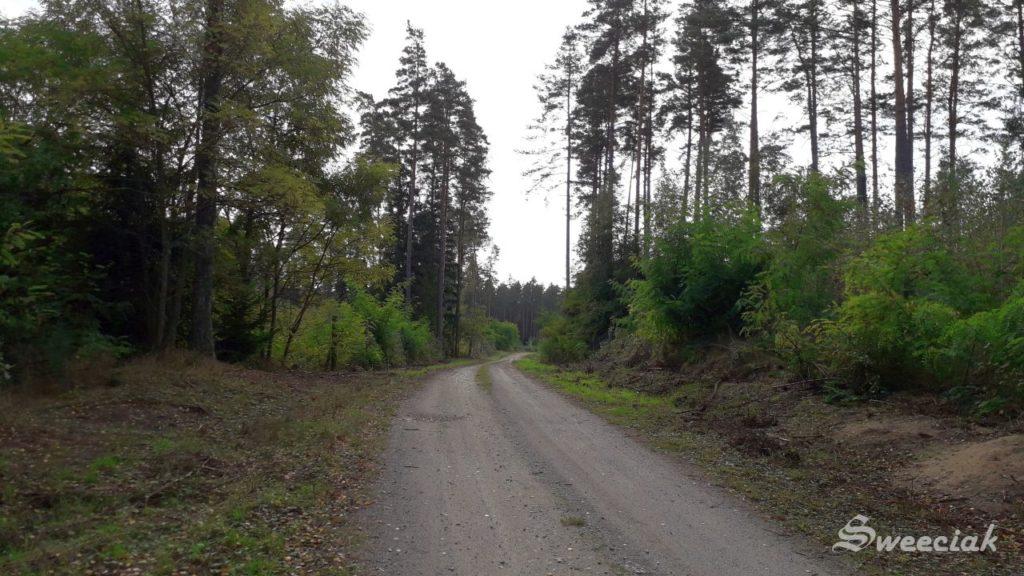Spacer po lesie - Bieńki